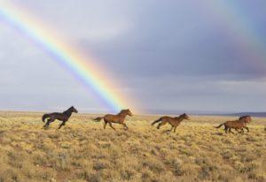 Frasi sulla libertà, cavalli selvaggi
