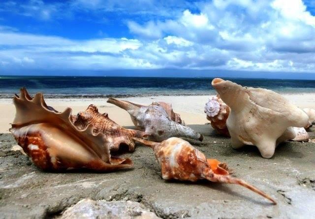 Zanzibar, le conchiglie cipree