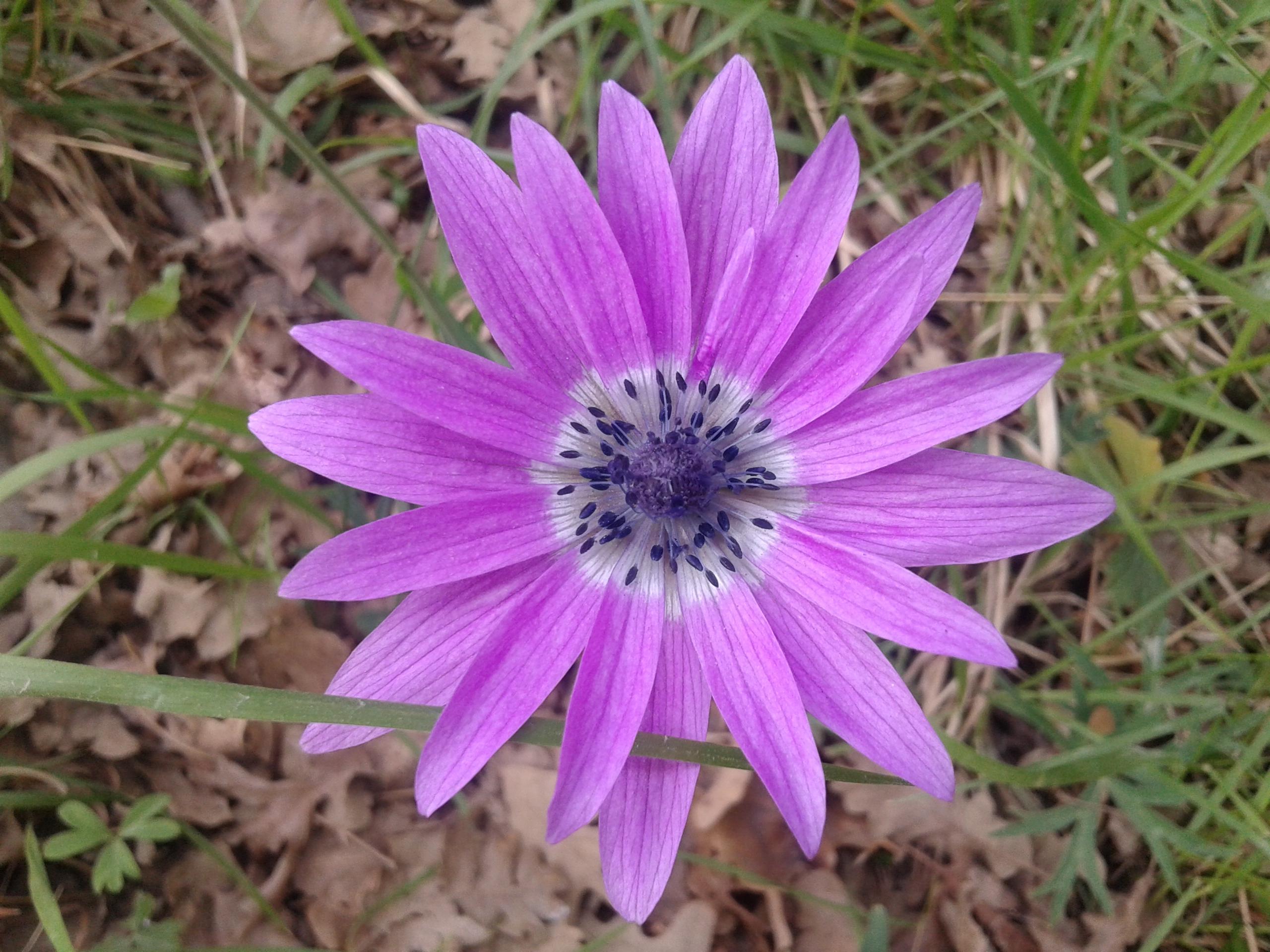 Nasce un 39 app per riconoscere piante e fiori il mio for Piante e fiori