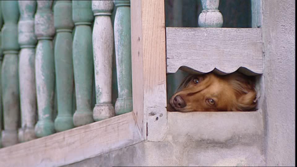il musetto triste di un cane chiuso sul balcone