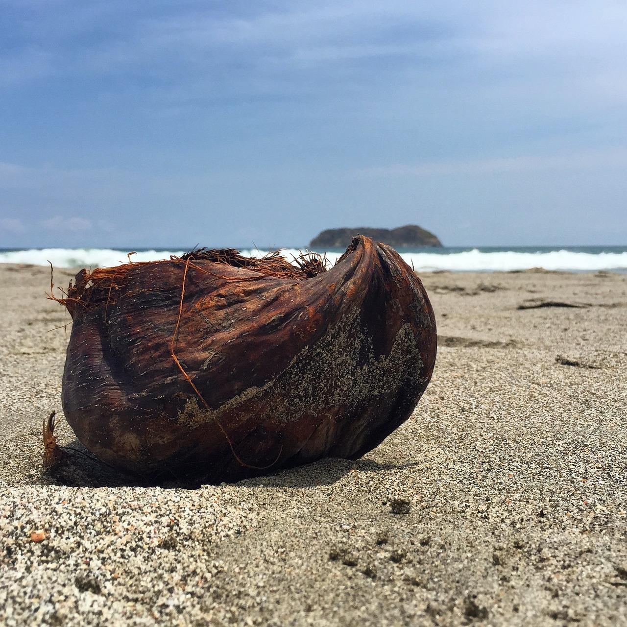 Coco Island, Costa Rica, Coconut on the Beach