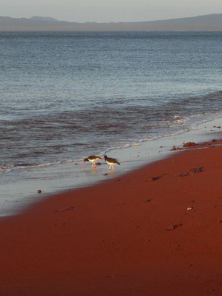 Le spiagge più strane del mondo, Rabida Island Galapagos