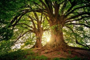 Festa degli Alberi, scorcio di un bosco