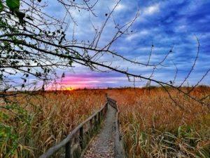 Oasi Lipu Massaciuccoli, tramonto sull'oasi