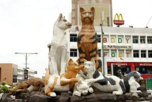 Mette gattofile, Kuching, Bòrneo