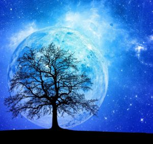 Terra ed Albero, per Earth Day giornata mondiale della terra 2020