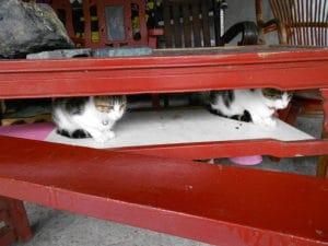 Mete gattofile, Houtong Taiwan
