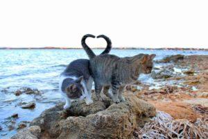 Mete gattofile, Su Pallosu