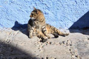 Mete gattofile, Chefchaouen, Marocco
