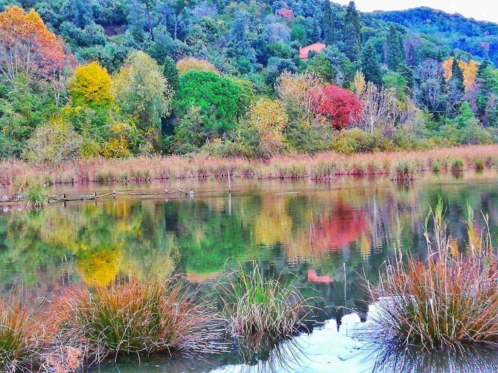 Foliage in Toscana, Oasi Lipu Massacciucoli