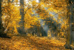 Foliage in Toscana