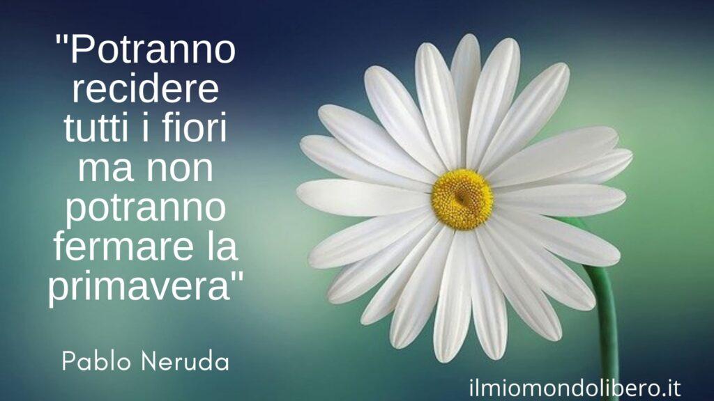 """Frasi sulla primavera, una margherita ed la frase di Neruda """"Potranno recidere tutti i fiori ma non potranno fermare la primavera""""."""