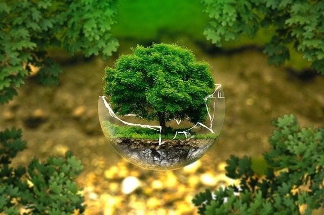 Albero in una sfera di vetro rotta, il mio simbolo per Earth Day giornata mondiale della terra