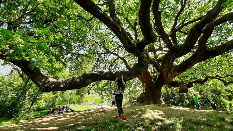 Quercia delle Streghe, toccando la quercia ho percepito una forte energia