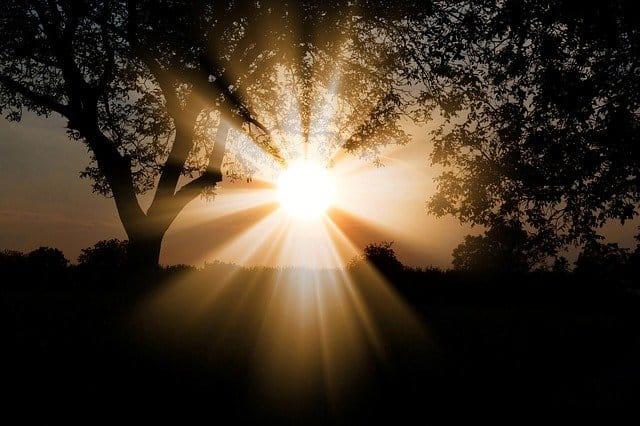 Solstizio d'estate, alba tra gli alberi