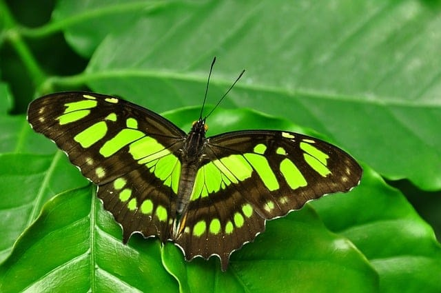 Significato farfalla, una farfalla marrone e verde